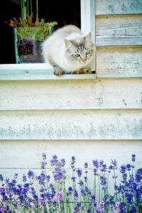 cat-1169300_960_720_renamed_8582